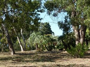 Der botanische Garten auf Lokrum