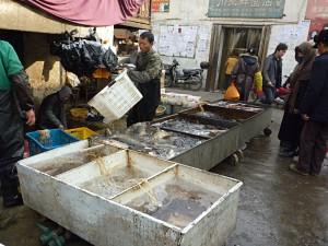 Shopping in Kuqa: Fresh fish