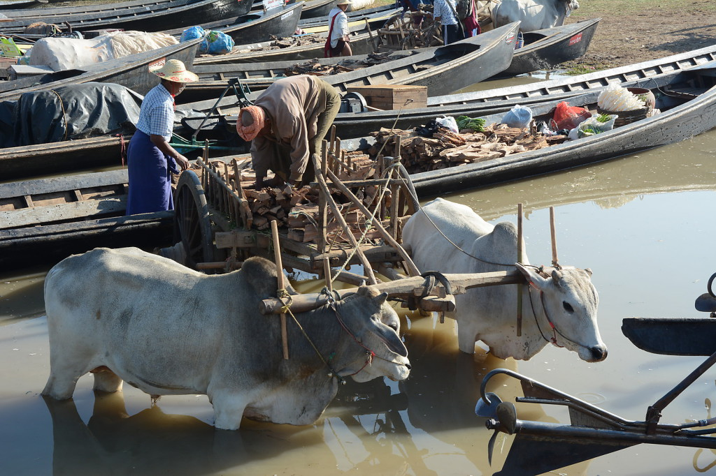 Traders exchanging the goods from ox-cart to boat and vice-versa