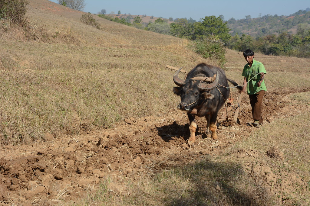 Myanmar's people span more than 150 years of history, from ox plough and cooking on open fire to smartphone
