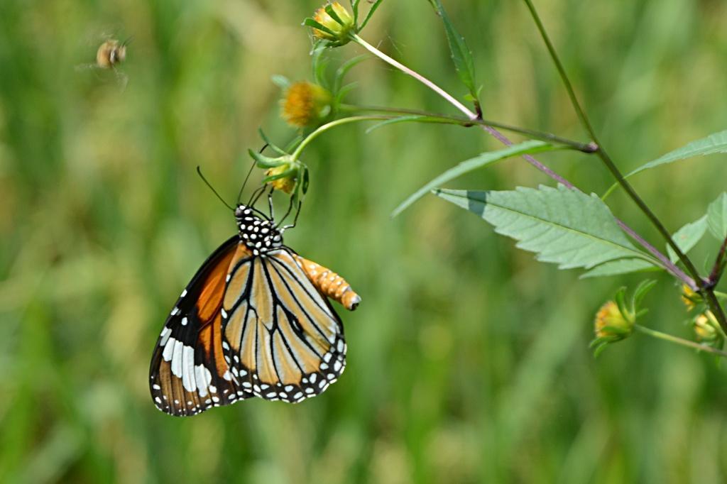 Wonderful nature in Guizhou: Beautiful butterflies everywhere