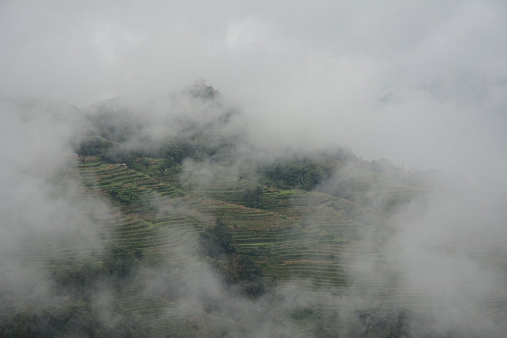Rice terraces in the morning clouds