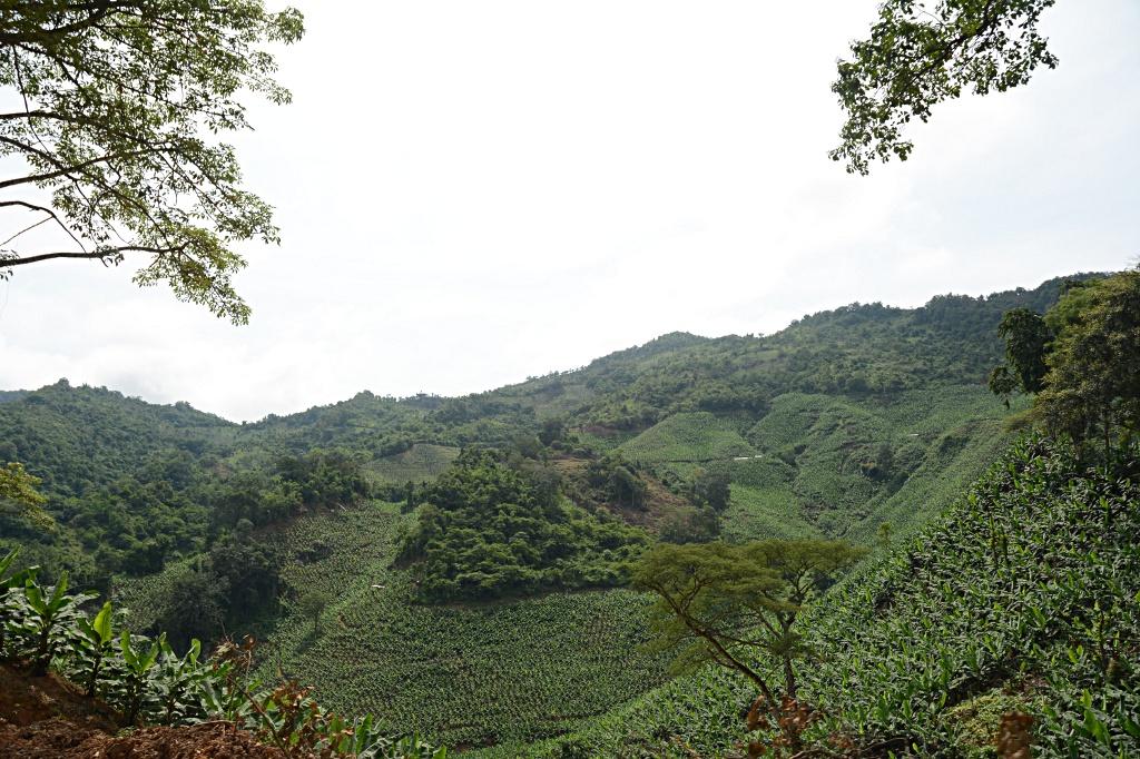 Banana plantations between Jiangcheng and Mengla
