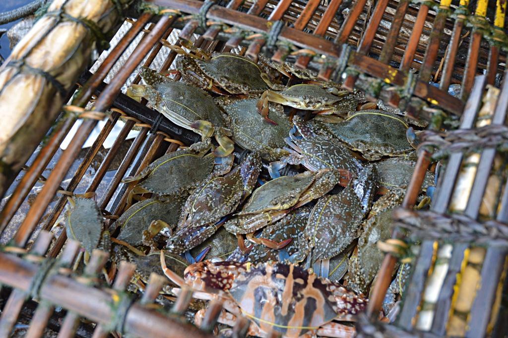 Oh crab, caught!