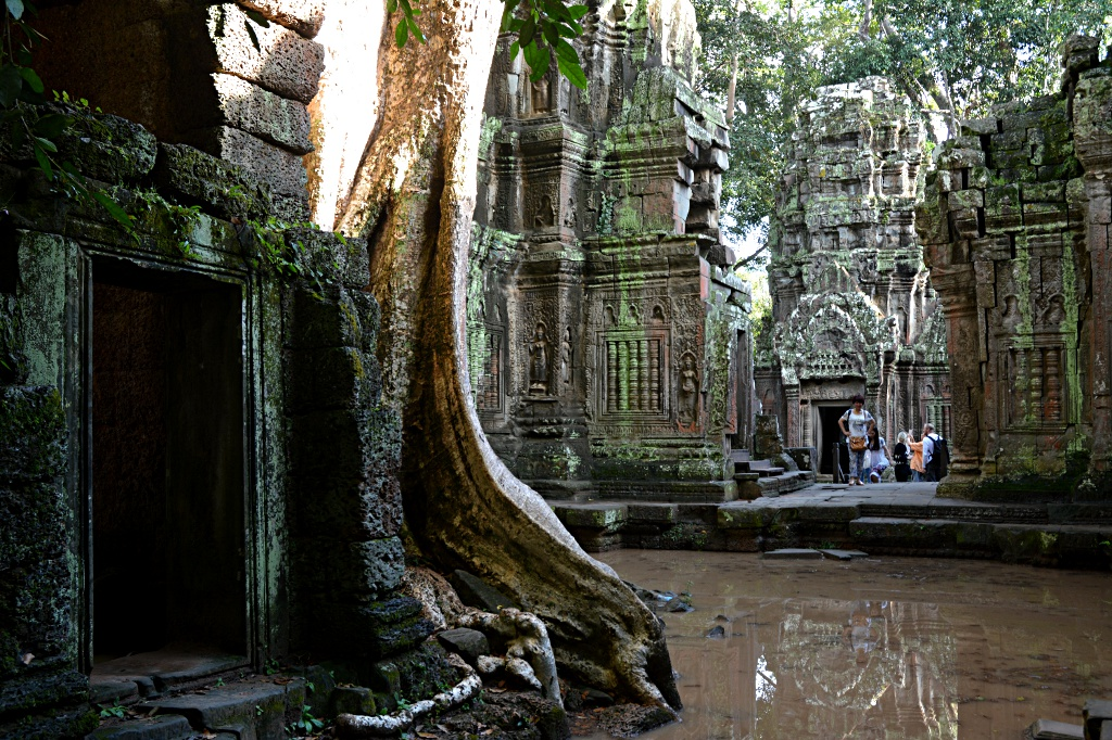 Tomb raider temple Ta Prohm