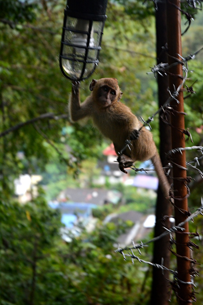 Friendly monkey baby on Tiger Cave Temple hill