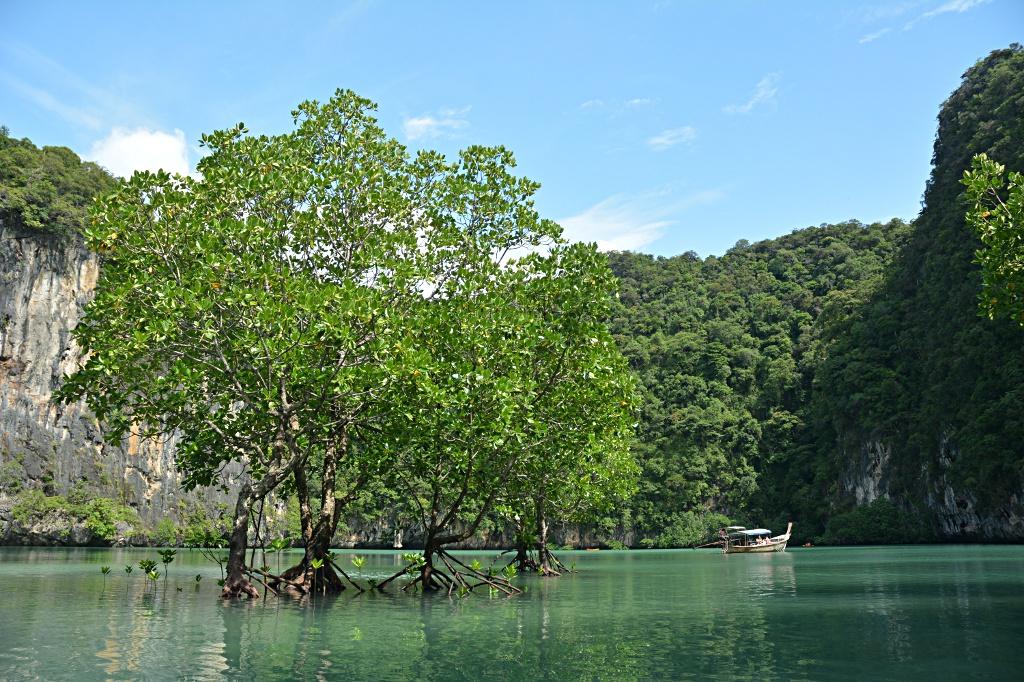 Mangroven in der Lagune von Ko Hong