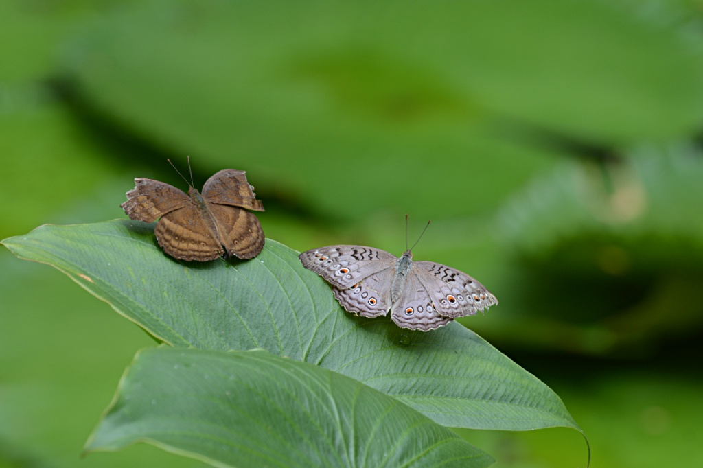 Butterfly Farm in Teluk Bahang on Penang