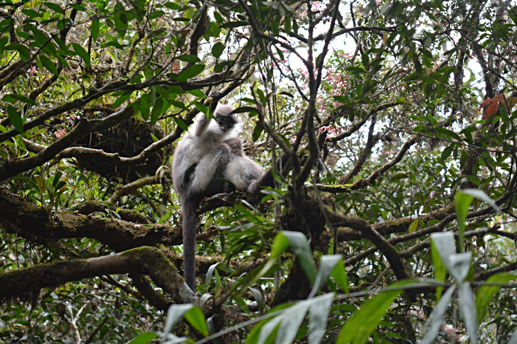 Curious and scared: monkeys near the great junction