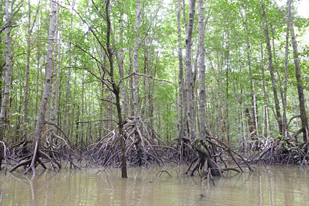 Finally made it to the mangrove forest, this time near Krabi